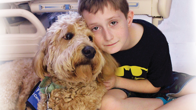therapy-dog1